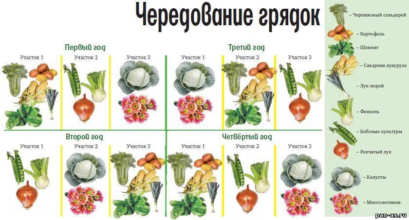 Какие овощи сажать после каких овощей в огороде 798